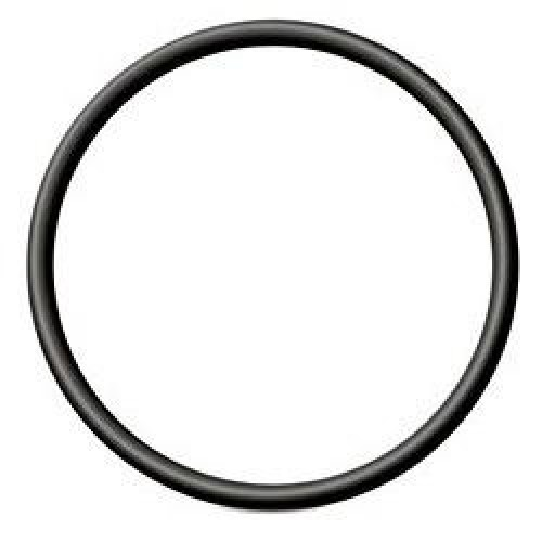 Tri Clamp O Ring 2